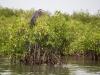 Sine Saloum, la mangrove, et les magnifiques oiseaux